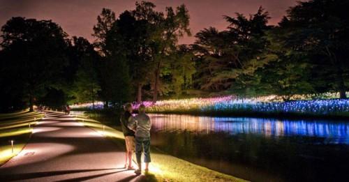 Integral arquimaster for Jardin botanico nocturno 2016