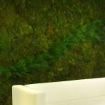 Jardines verticales: entornos de trabajo más naturales