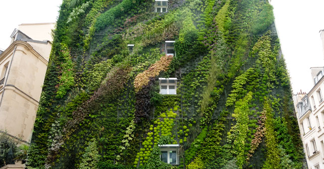 Taller techos verdes jardines verticales y tematicas for Jardines verdes