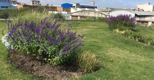 eco cubiertas vuelca su experiencia con sus terrazas ajardinadas y ecolgicas
